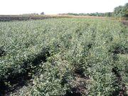 Поливные поля,  23 гектара земли,  теплицы,  ферма Донецк.