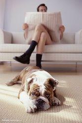 Выездная мобильная химчистка мягкой мебели и ковров на дом.