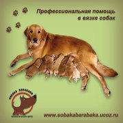 помощь в вязке собак
