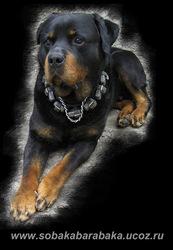 продажа дрессированных собак