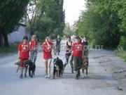 Выгул собак в Донецке и Макеевке.