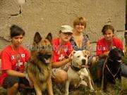 Подготовка охотничьих собак в Донецке и области.