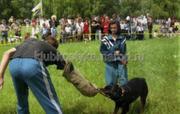 Услуги животным Донецк и область.