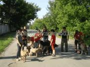 Гостиницы для животных в Донецке и области.