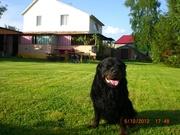 Отдых на уютной даче в деревне Студенок  и 2 ком.квартира в центре Святогорска.