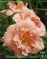 Лилейники для Вашего сада