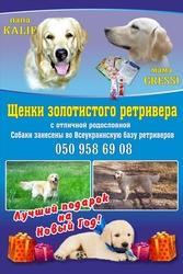 Щенки Золотистого ретривера Краматорск