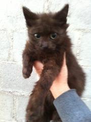 Возьмите черного пушистого котенка в добріые руки